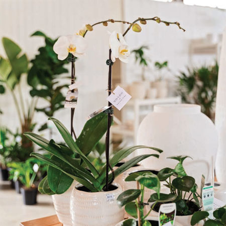 In Home Consulting Mondo Botanical - Maleny Flowers