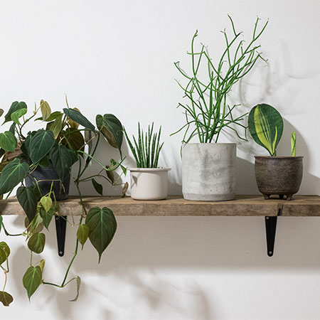 Plant Care and Tips
